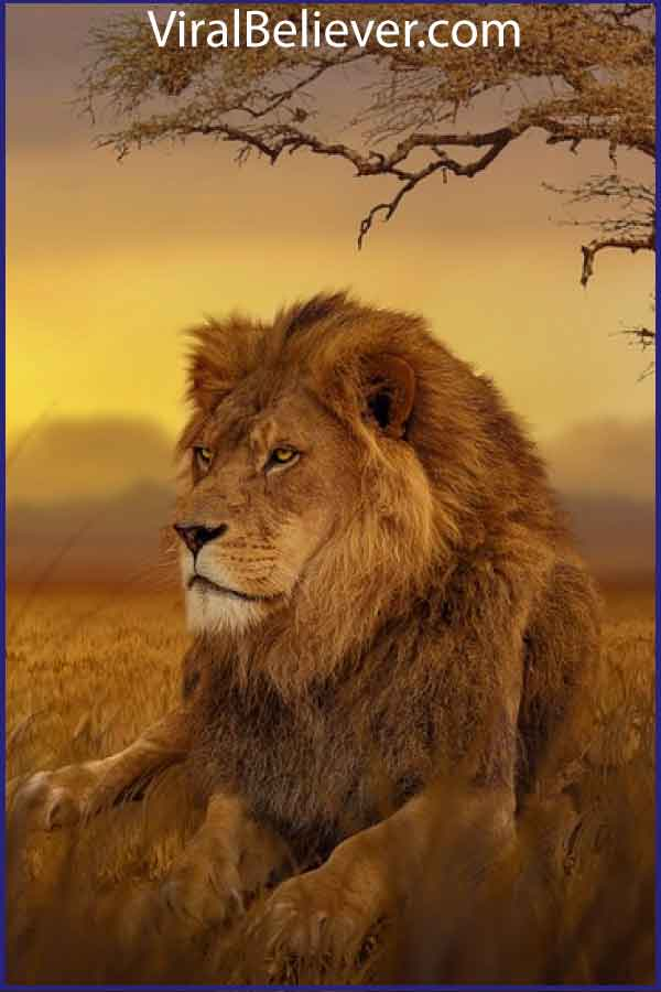 bold as a lion featured image