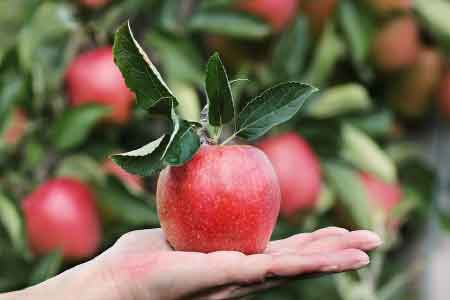 image of an apple symbolizing the fruit of the Spirit