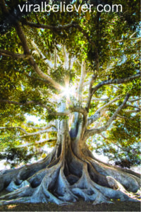 Rooted And Grounded In Love - A Sermon